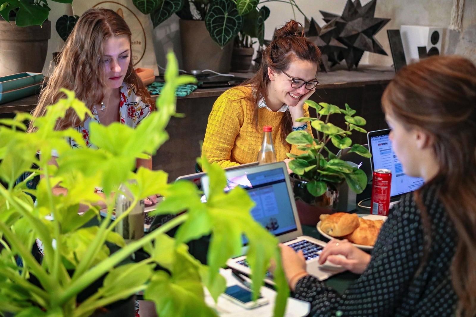 plante bureau antistress productivité