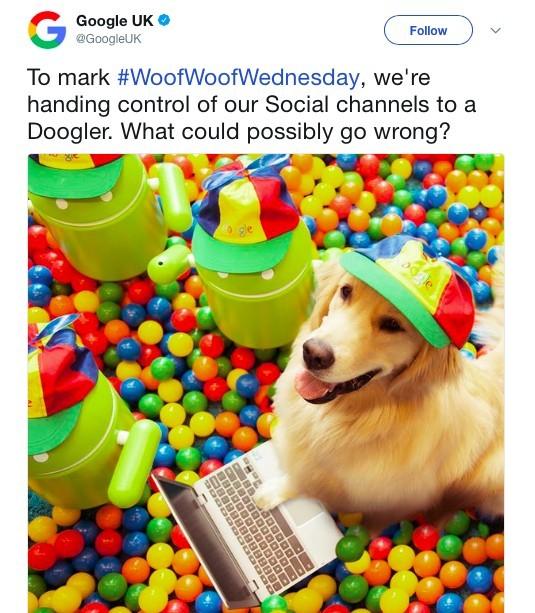 chien chez Google