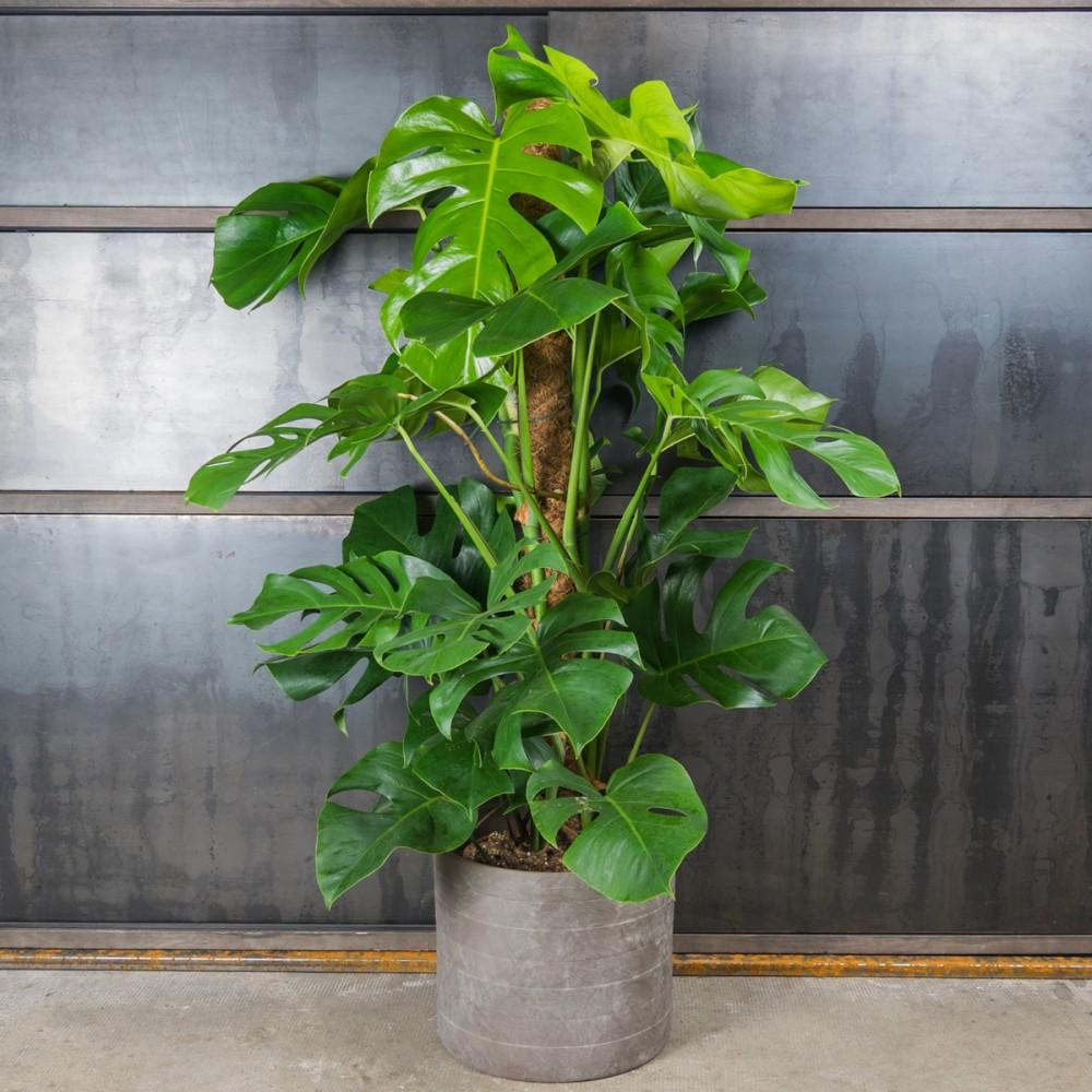 Une plante OfficeRiders